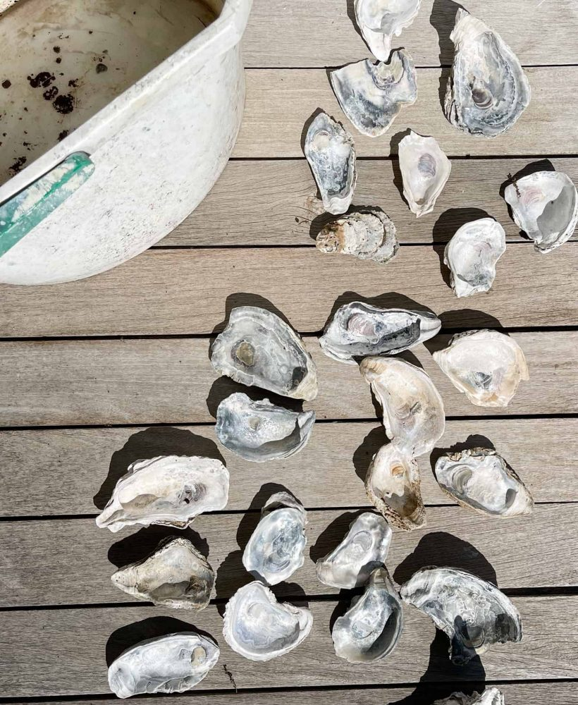 clean oyster shells for crafting